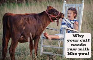 Calf needs raw milk II